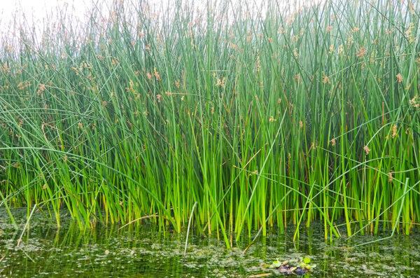 Lake Atitlan Reeds Tour